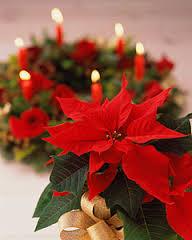 Il Racconto Della Stella Di Natale.Racconti Di Natale La Leggenda Messicana Della Stella Di Natale